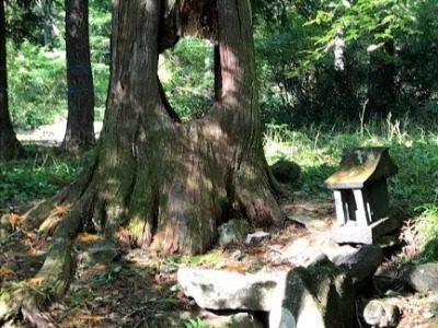 秋の富士見高原 新蕎麦ハイキングde婚活(11月17日) ~もののけの森でおっこと亭の新蕎麦を楽しむ~(予告編)